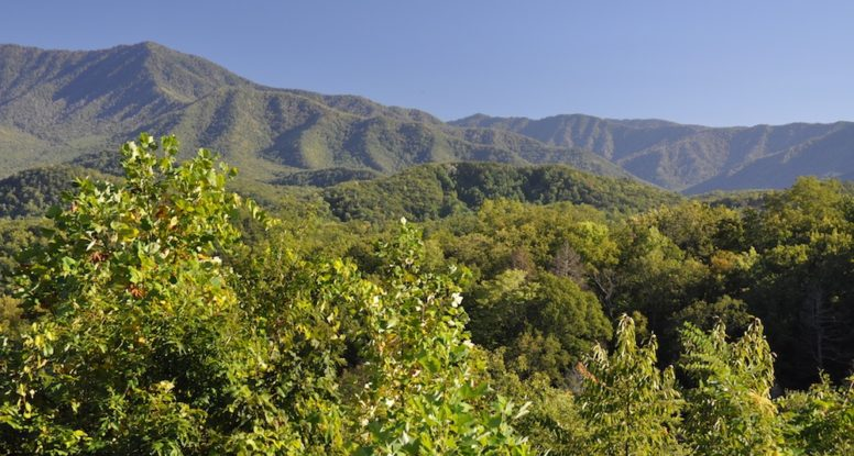 beautiful photo of Smoky Mountains in summer