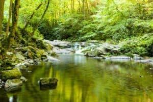 quiet pool in mountain stream